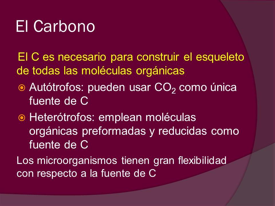 El Carbono El C es necesario para construir el esqueleto de todas las moléculas orgánicas. Autótrofos: pueden usar CO2 como única fuente de C.