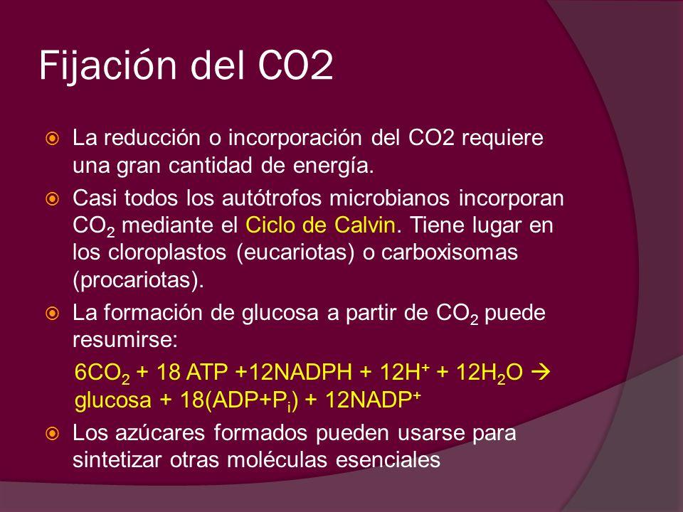 Fijación del CO2La reducción o incorporación del CO2 requiere una gran cantidad de energía.
