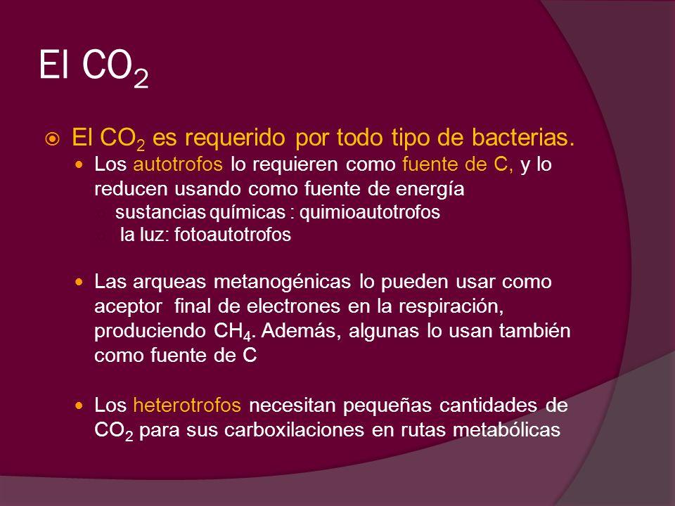 El CO2 El CO2 es requerido por todo tipo de bacterias.