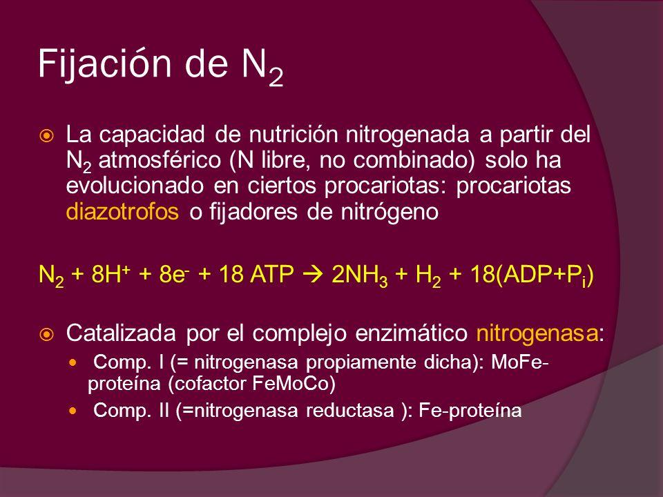 N2 + 8H+ + 8e + 18 ATP  2NH3 + H2 + 18 (ADP + Pi)