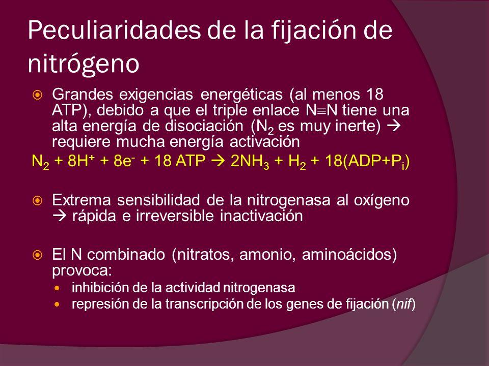Peculiaridades de la fijación de nitrógeno