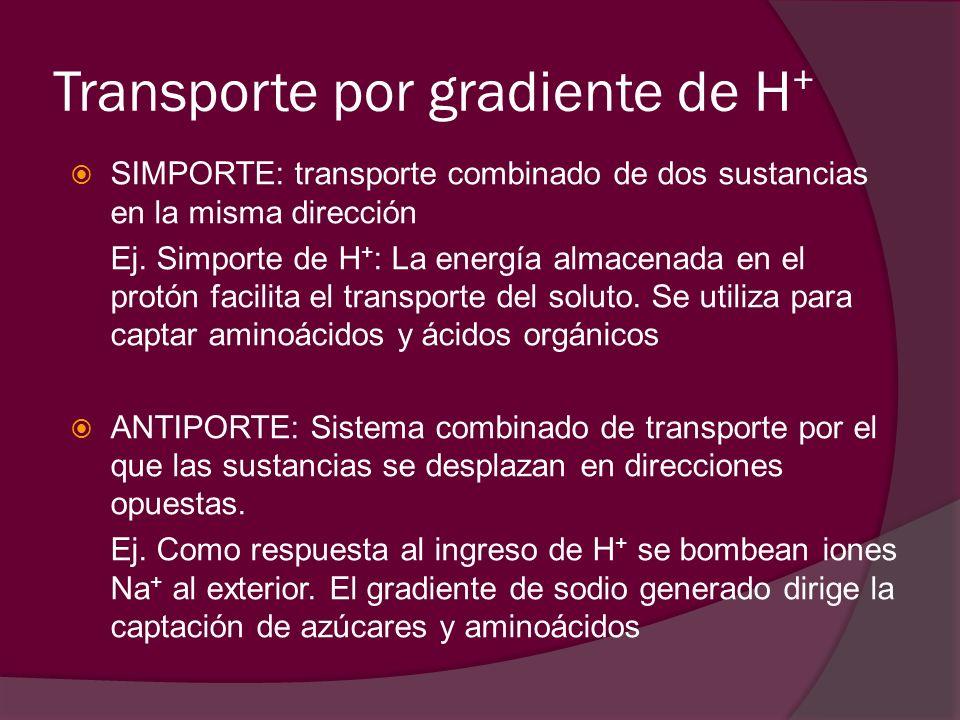 Transporte por gradiente de H+