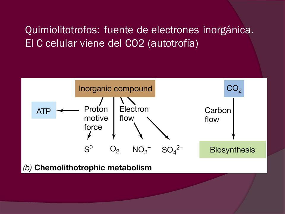 Quimiolitotrofos: fuente de electrones inorgánica