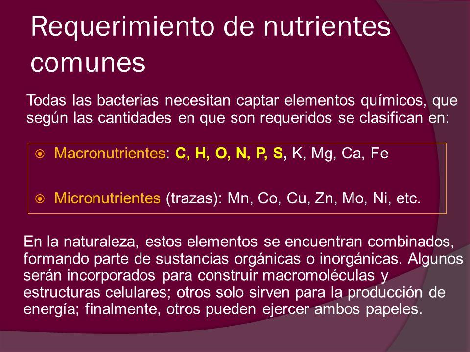 Requerimiento de nutrientes comunes