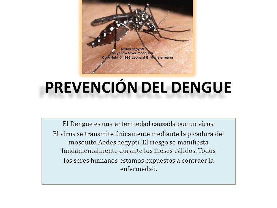PREVENCIÓN DEL DENGUE El Dengue es una enfermedad causada por un virus.