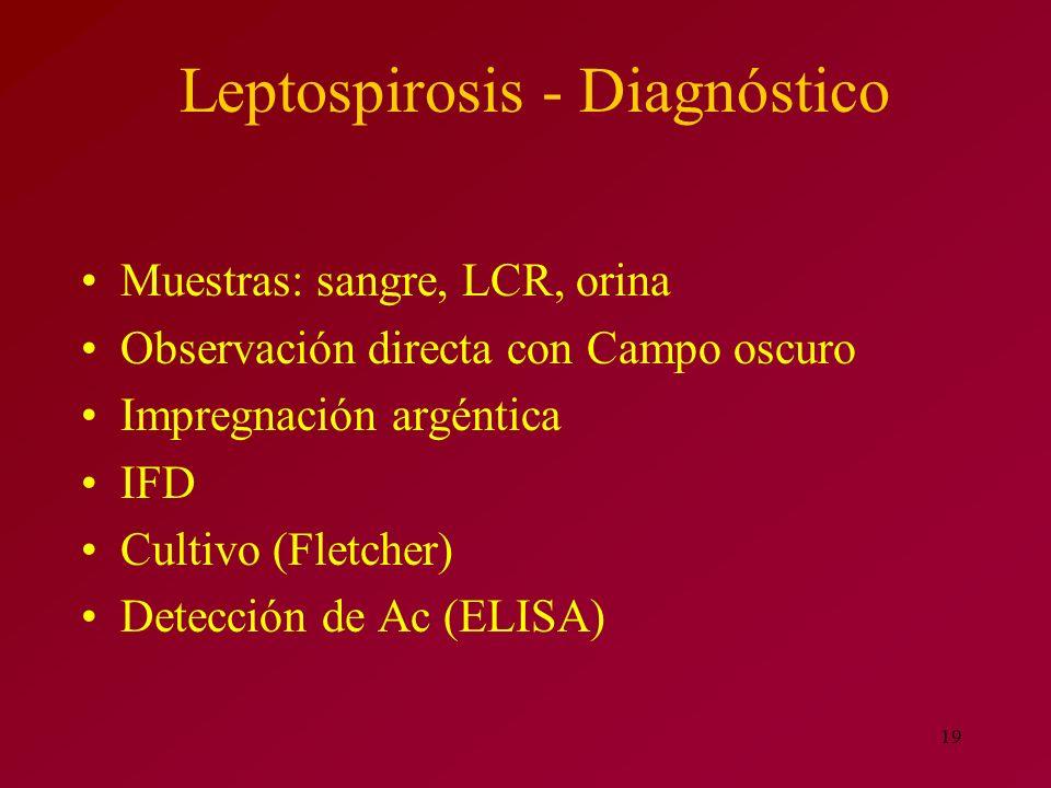 Leptospirosis - Diagnóstico
