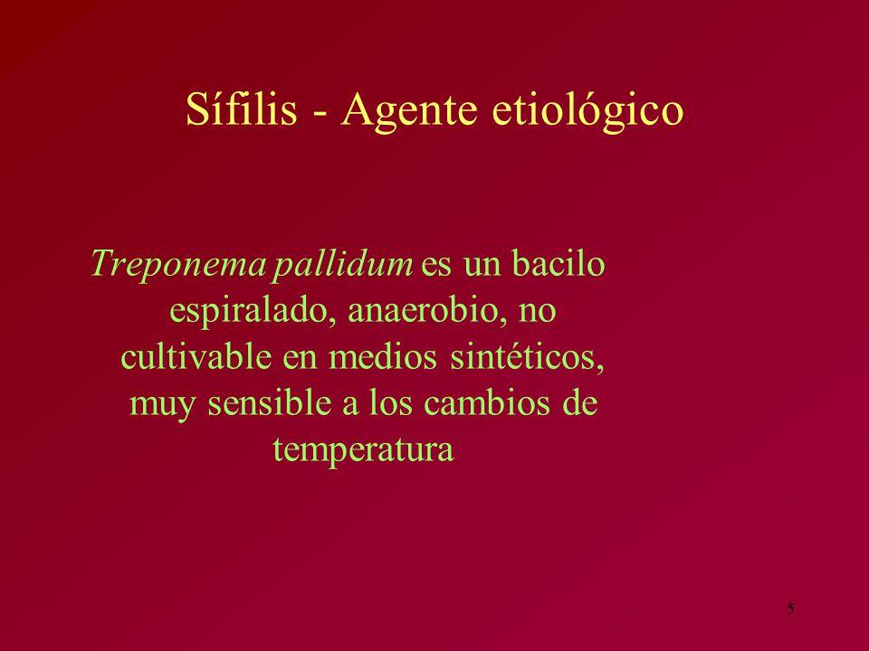 Sífilis - Agente etiológico