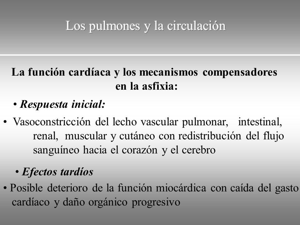 La función cardíaca y los mecanismos compensadores