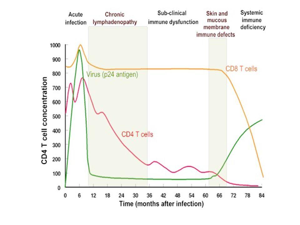 PERÍODO ASINTOMÁTICO Las células T CD4(+) decrecen lenta y paulatinamente.