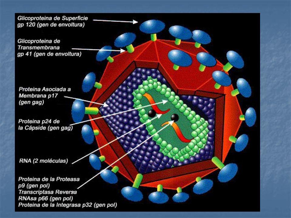 Familia Retroviridae Subfamilia Lentivirinae. Partícula esférica de 100 – 110 nm. Envoltura de doble capa lipídica.