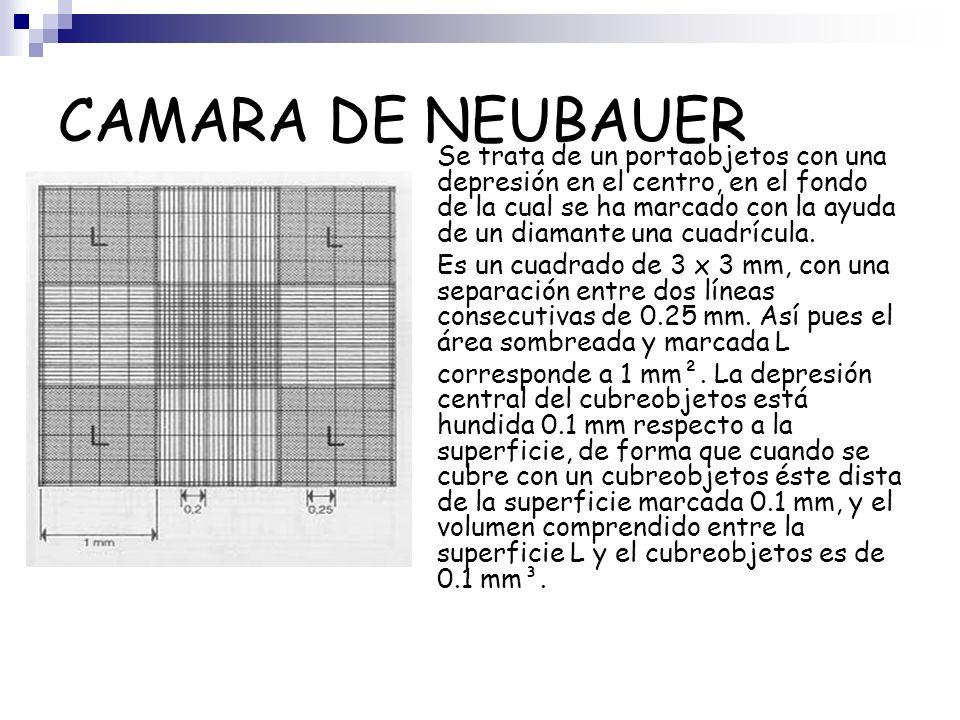 CAMARA DE NEUBAUER