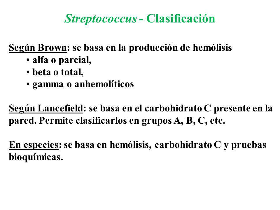 Streptococcus - Clasificación