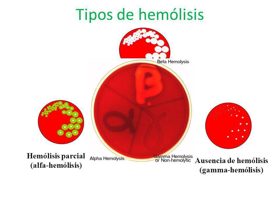 Hemólisis total (beta-hemólisis) Hemólisis parcial (alfa-hemólisis)
