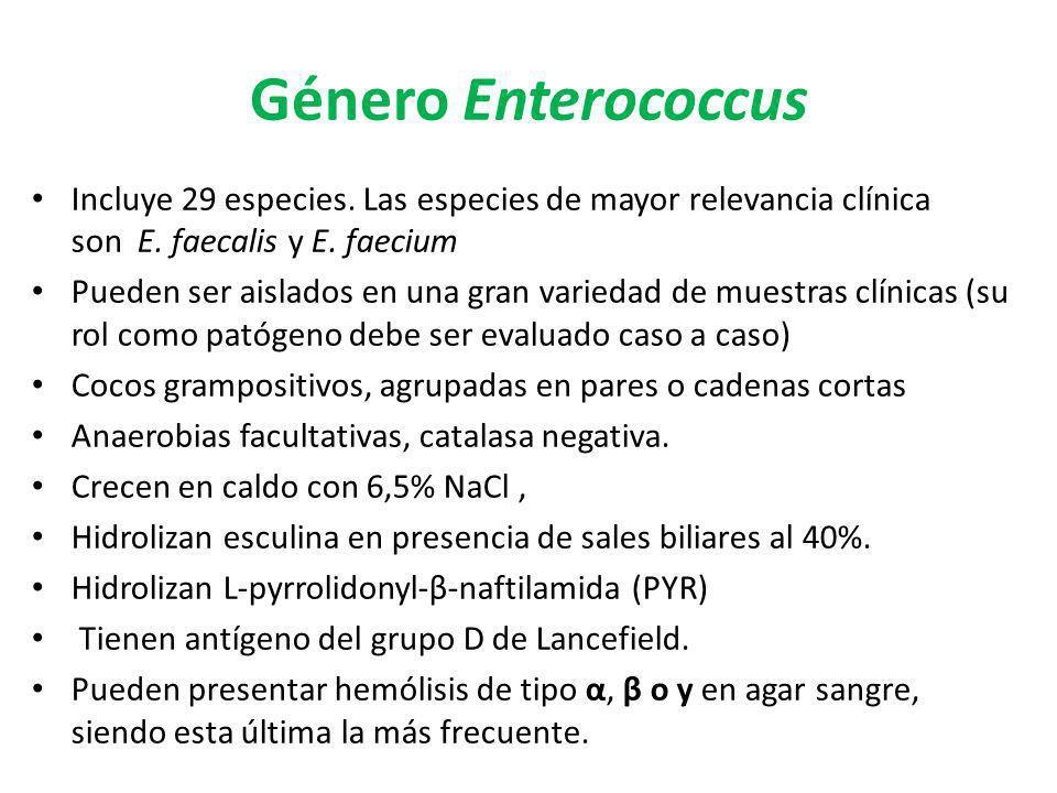Género EnterococcusIncluye 29 especies. Las especies de mayor relevancia clínica son E. faecalis y E. faecium.