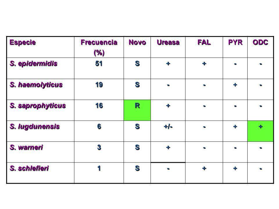 EspecieFrecuencia. (%) Novo. Ureasa. FAL. PYR. ODC. S. epidermidis. 51. S. + - S. haemolyticus. 19.