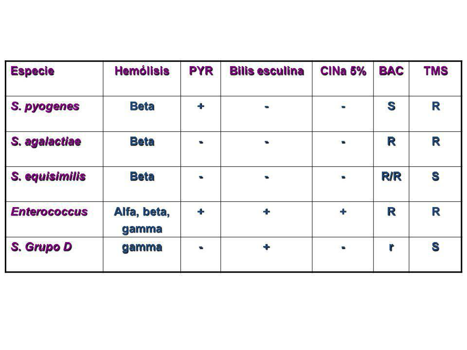 Especie Hemólisis. PYR. Bilis esculina. ClNa 5% BAC. TMS. S. pyogenes. Beta. + - S. R. S. agalactiae.