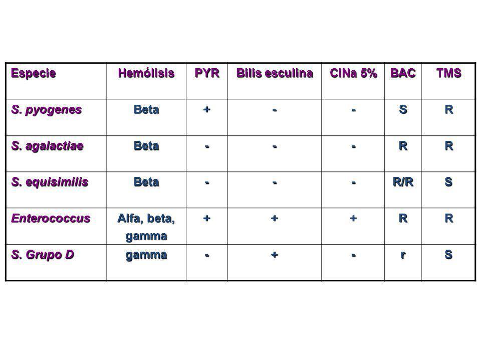 EspecieHemólisis. PYR. Bilis esculina. ClNa 5% BAC. TMS. S. pyogenes. Beta. + - S. R. S. agalactiae.