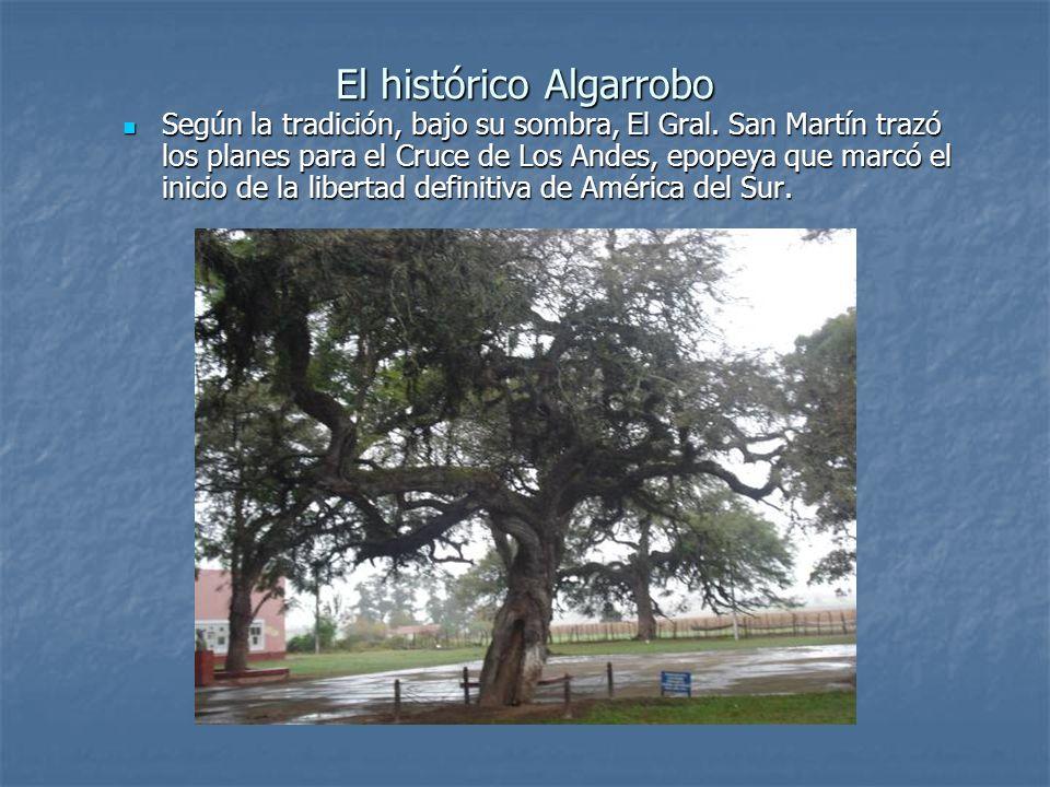 El histórico Algarrobo