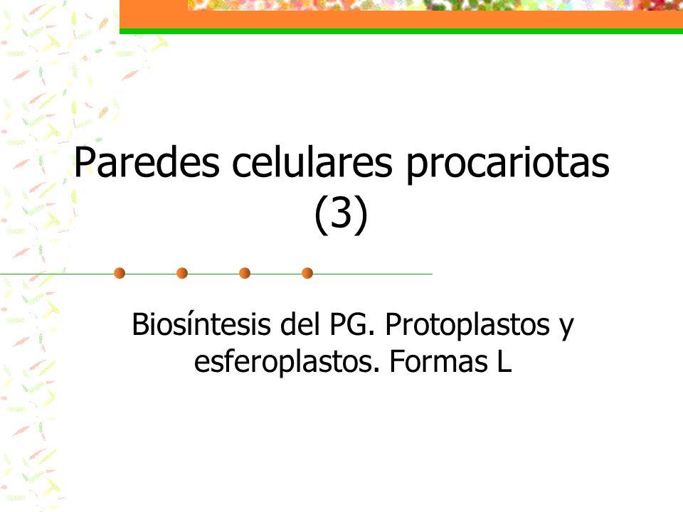 Paredes celulares procariotas (3)