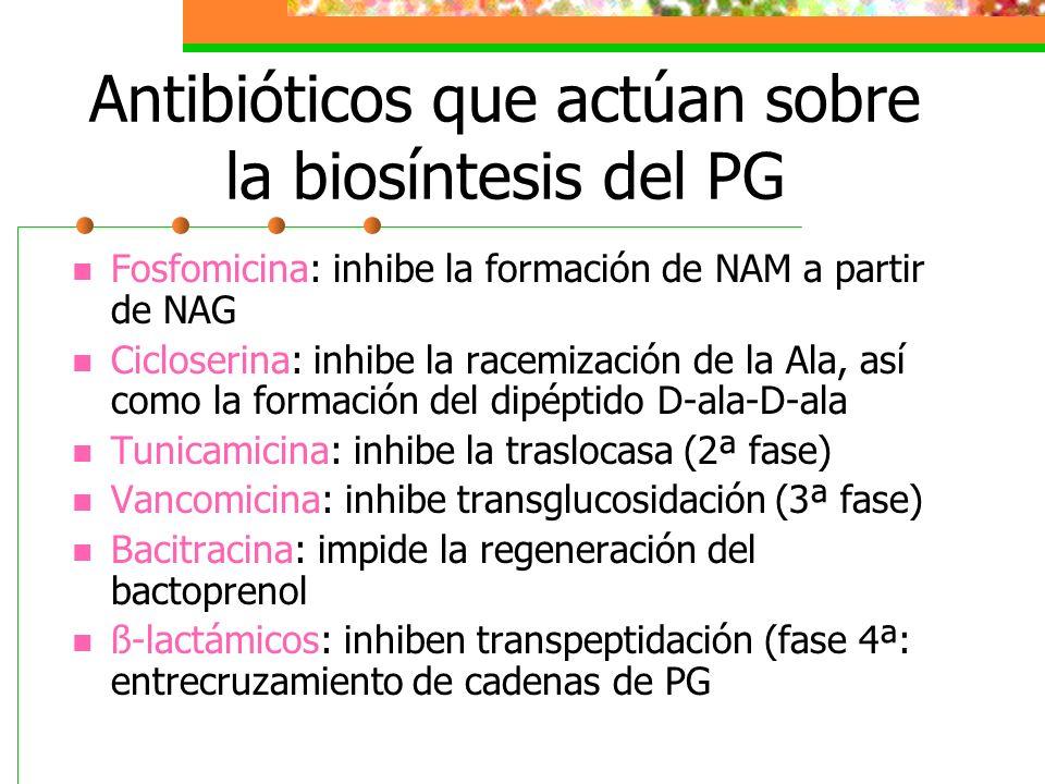 Antibióticos que actúan sobre la biosíntesis del PG