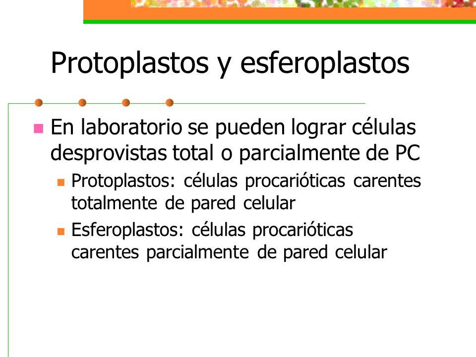 Protoplastos y esferoplastos