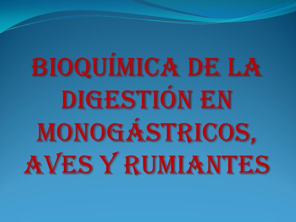 Bioquímica de la Digestión en Monogástricos, Aves y Rumiantes