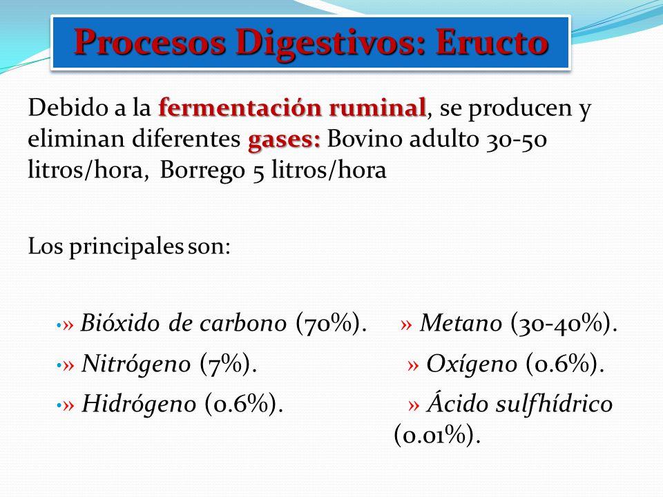 Procesos Digestivos: Eructo