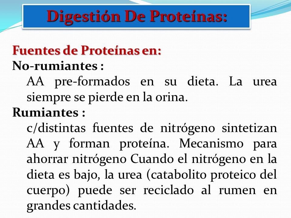 Digestión De Proteínas: