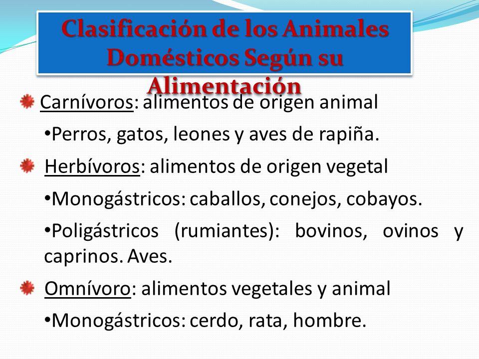 Clasificación de los Animales Domésticos Según su Alimentación