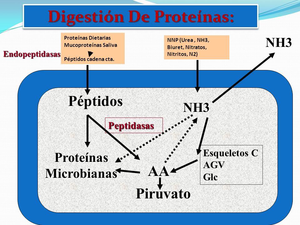 Digestión De Proteínas: Proteínas Microbianas