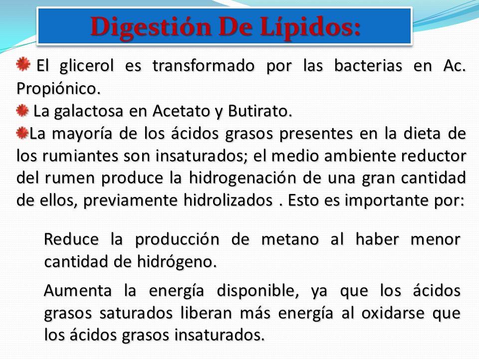 Digestión De Lípidos:El glicerol es transformado por las bacterias en Ac. Propiónico. La galactosa en Acetato y Butirato.