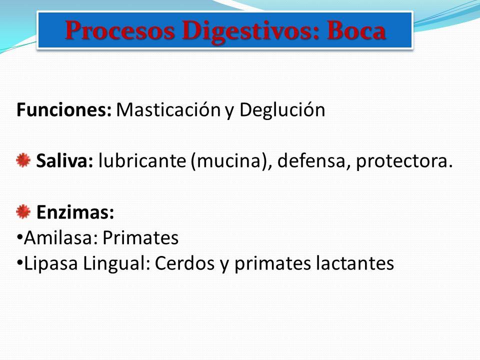 Procesos Digestivos: Boca