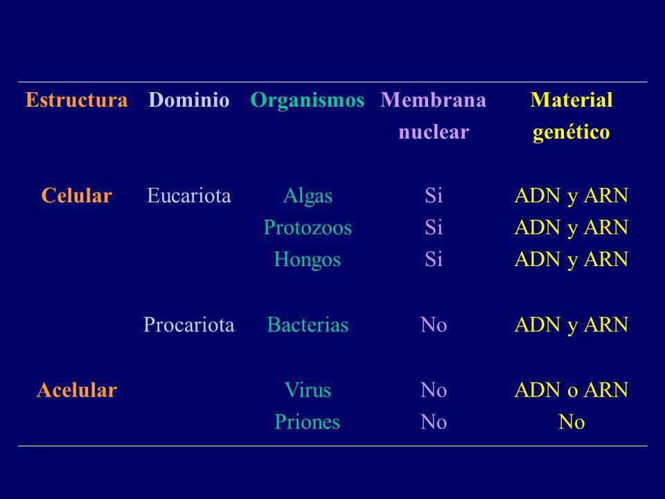 Estructura Celular. Dominio. Eucariota. Organismos. Algas. Protozoos. Hongos. Membrana. nuclear.