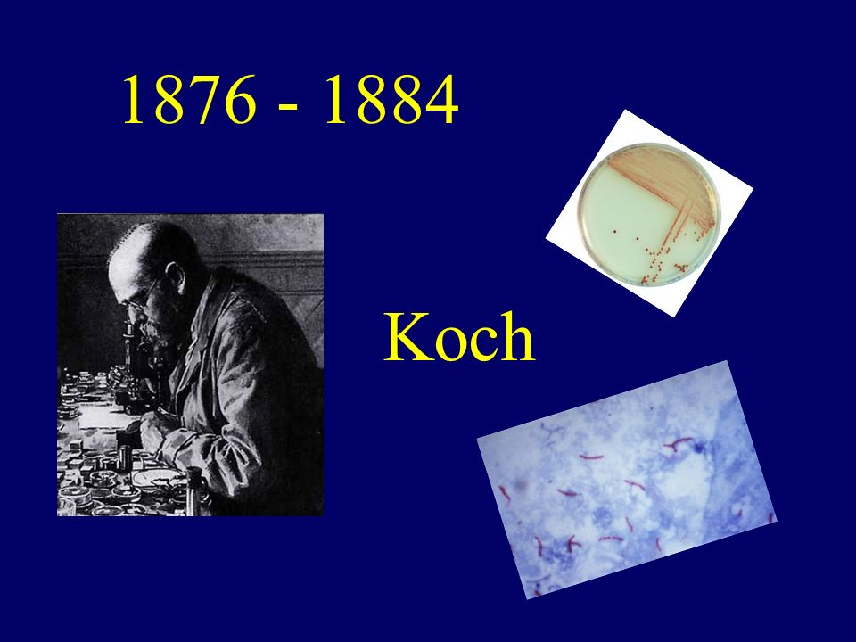 1876 - 1884 Koch