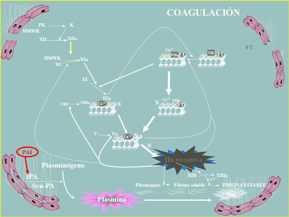COAGULACIÓN Xa IIa-TROMBINA IIa-TROMBINA Plasminógeno tPA Scu-PA
