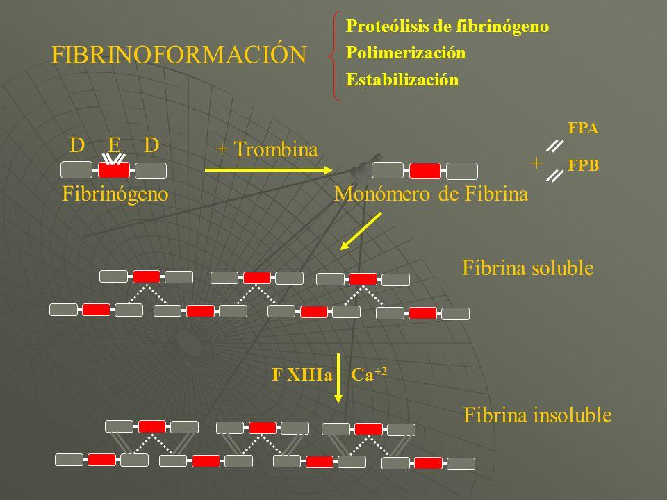 FIBRINOFORMACIÓN Fibrina insoluble Fibrina soluble D E D + Trombina