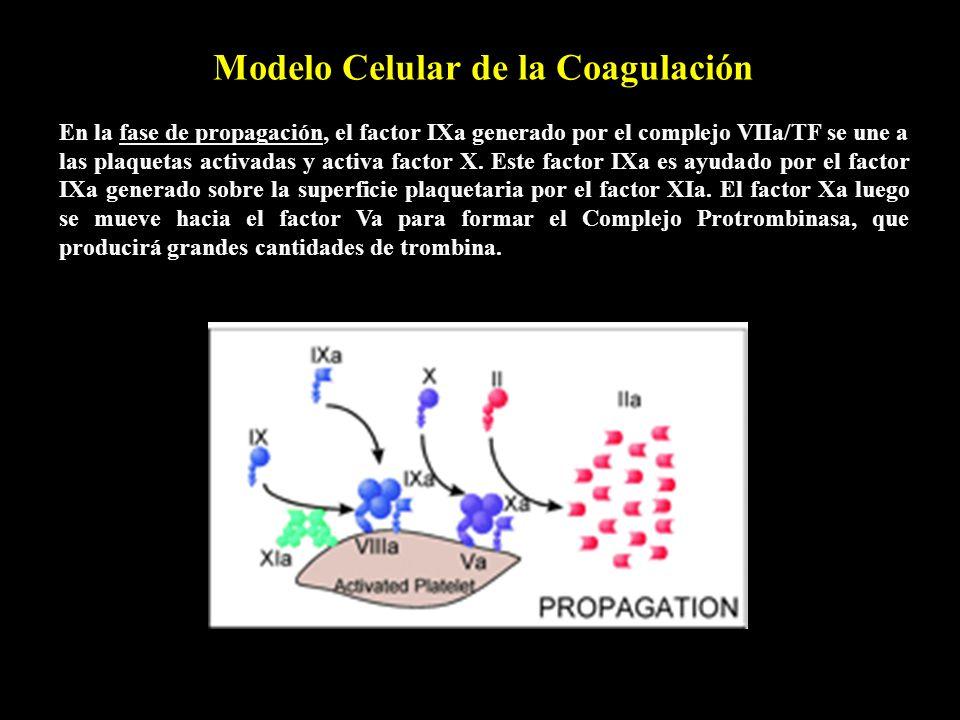 Modelo Celular de la Coagulación
