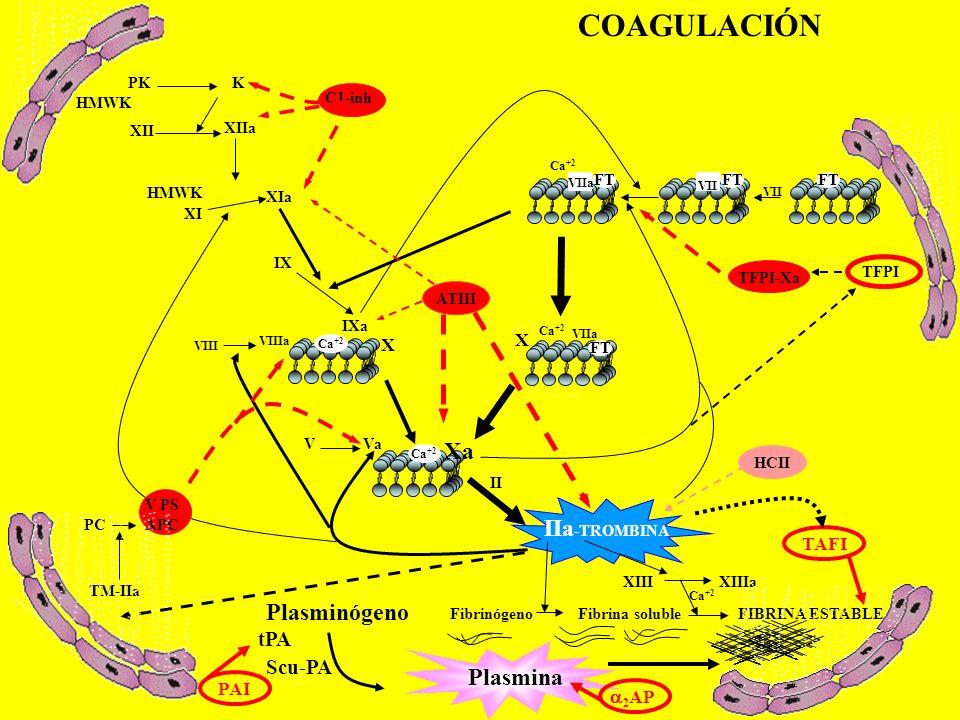 COAGULACIÓN Xa IIa-TROMBINA Plasminógeno Plasmina tPA Scu-PA X TAFI