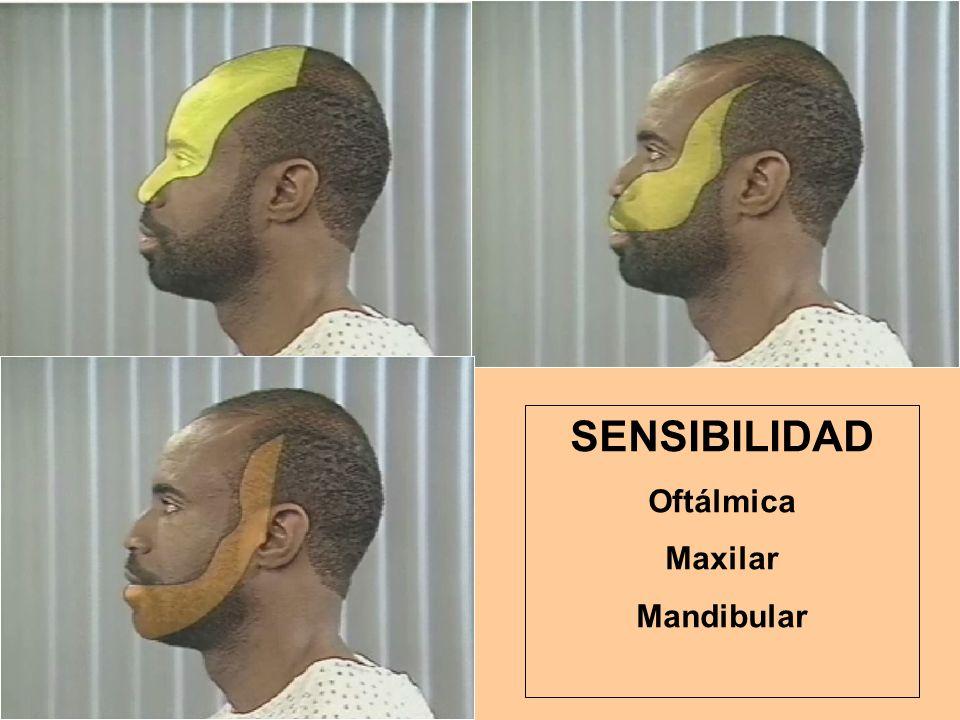 SENSIBILIDAD Oftálmica Maxilar Mandibular