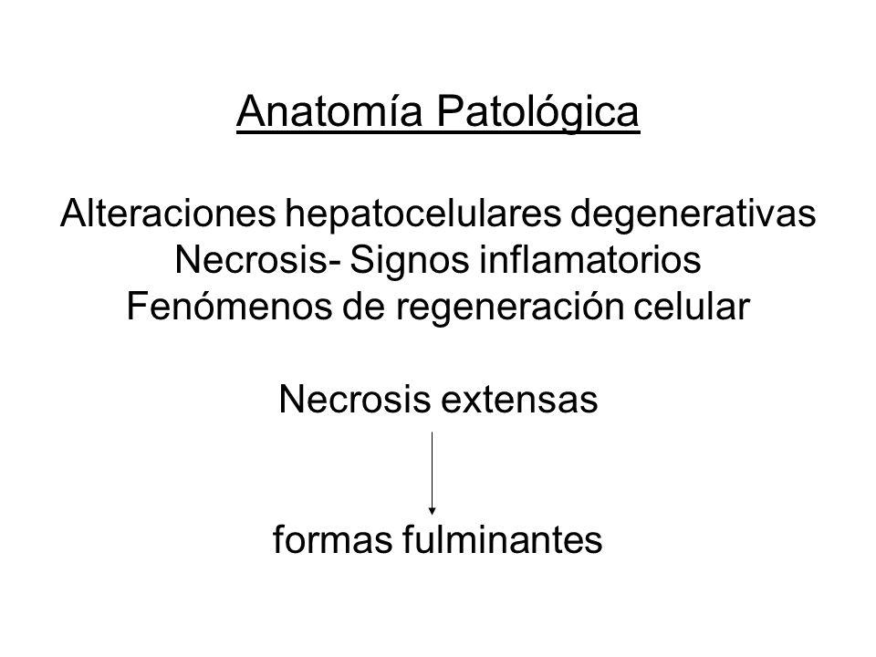 Anatomía Patológica Alteraciones hepatocelulares degenerativas Necrosis- Signos inflamatorios Fenómenos de regeneración celular Necrosis extensas formas fulminantes