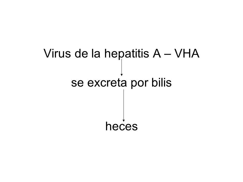 Virus de la hepatitis A – VHA se excreta por bilis heces