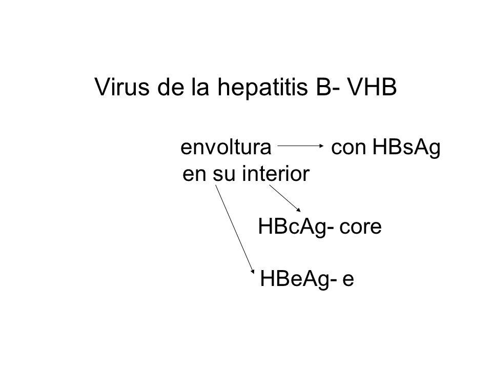 Virus de la hepatitis B- VHB envoltura con HBsAg en su interior