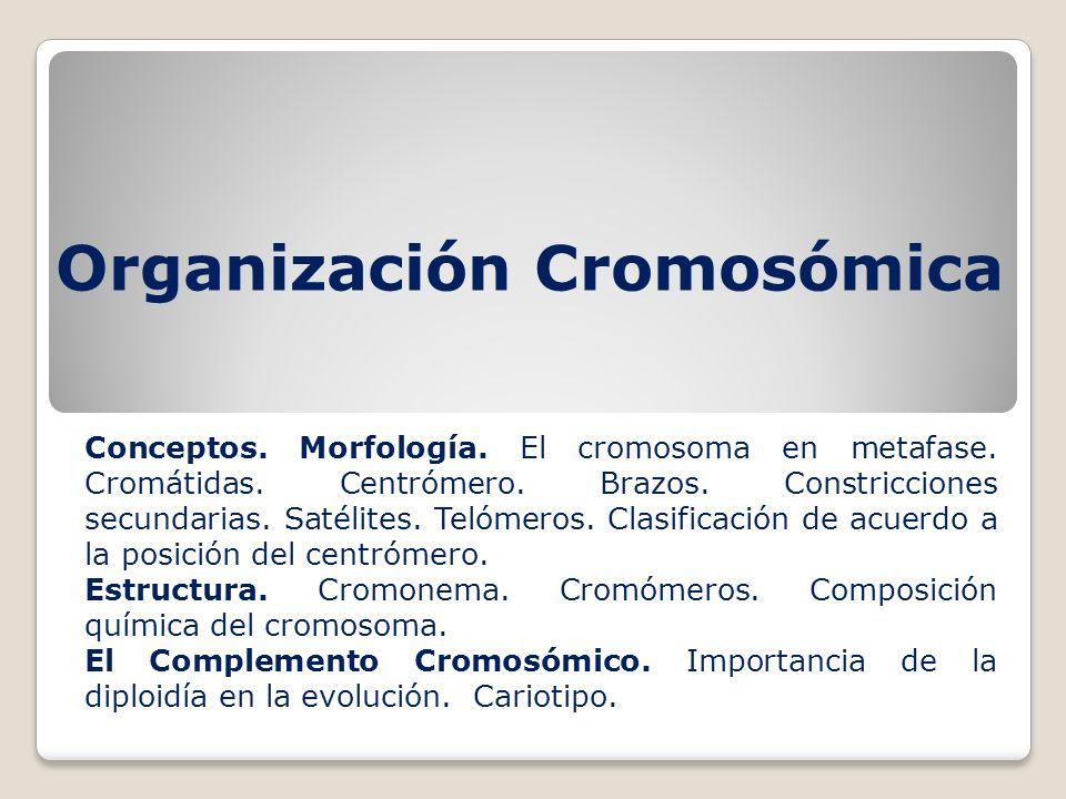 Organización Cromosómica