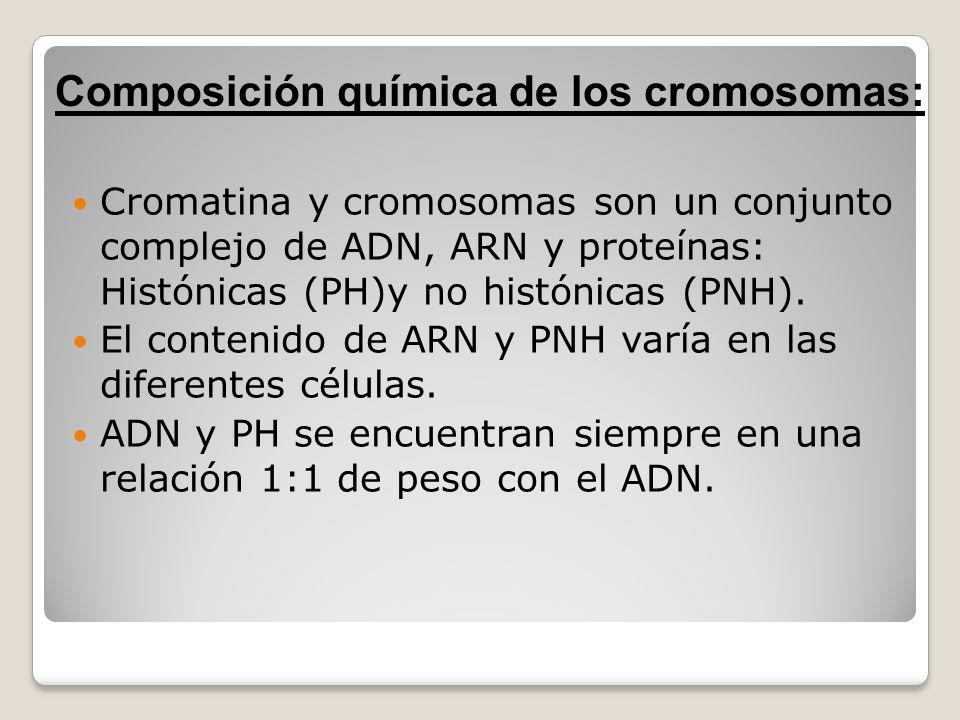 Composición química de los cromosomas: