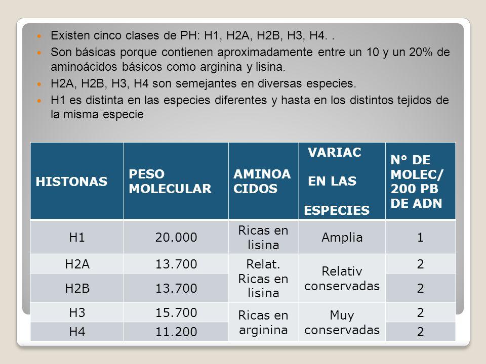 Existen cinco clases de PH: H1, H2A, H2B, H3, H4. .
