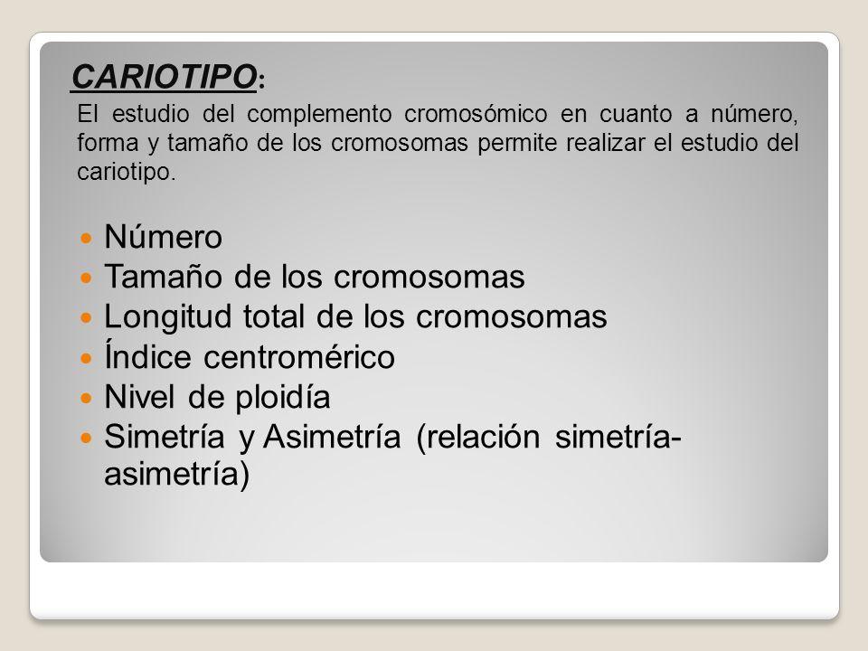 Tamaño de los cromosomas Longitud total de los cromosomas
