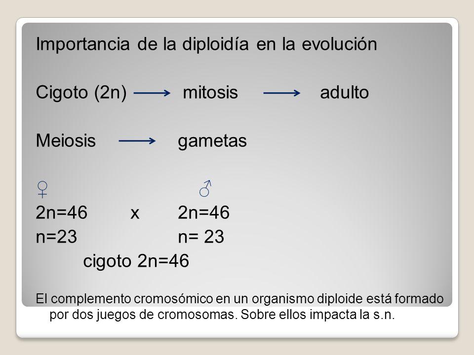 Importancia de la diploidía en la evolución Cigoto (2n) mitosis adulto