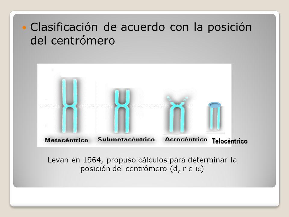 Clasificación de acuerdo con la posición del centrómero