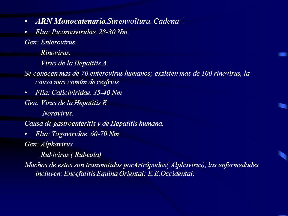 ARN Monocatenario.Sin envoltura. Cadena +