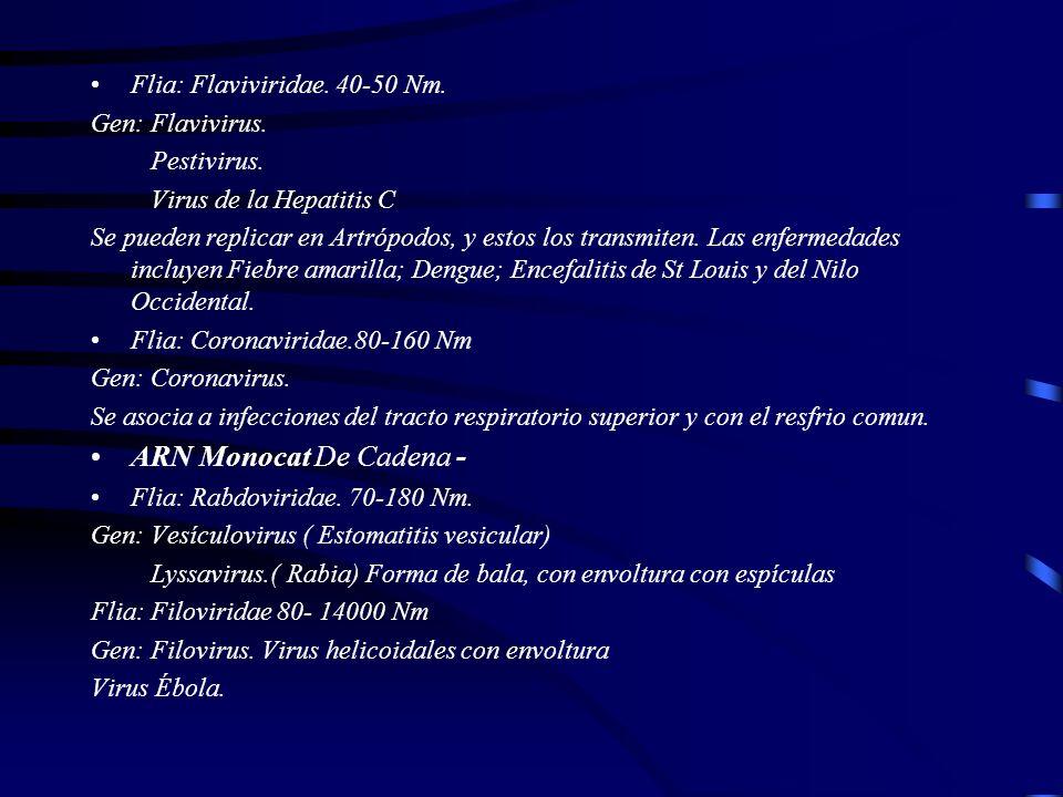 ARN Monocat De Cadena - Flia: Flaviviridae. 40-50 Nm. Gen: Flavivirus.